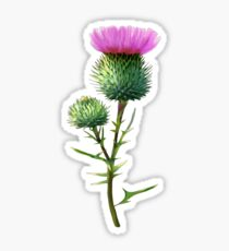 Thistle Sticker