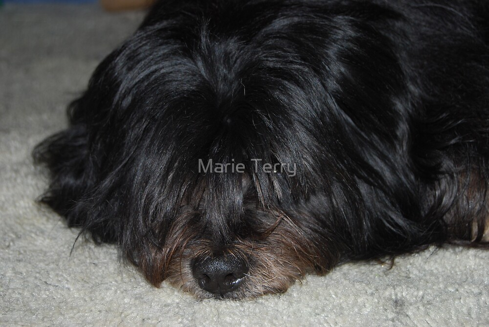 Dog or Mop? by Marie Terry