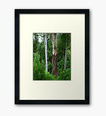 Mountain Ash, Otways. Framed Print