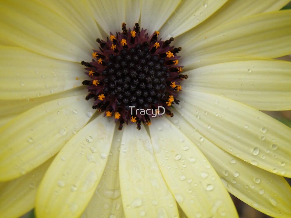 Daisy Star by TracyD