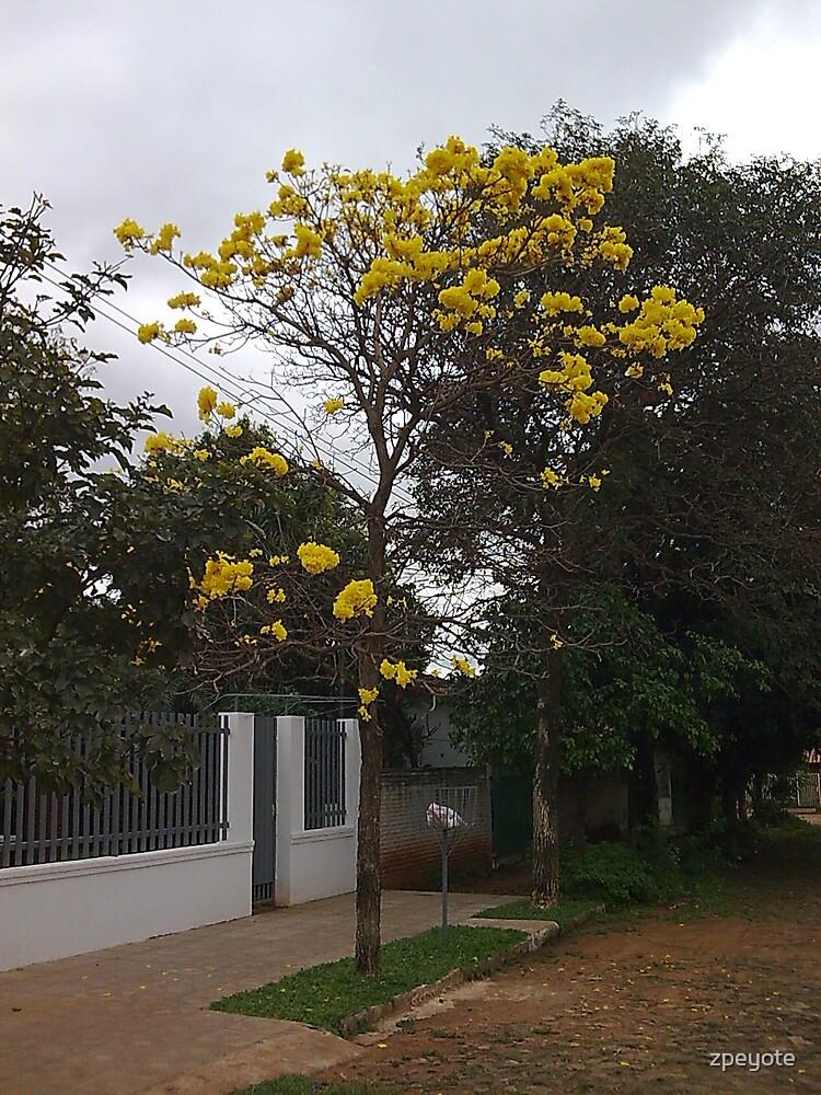 Lapacho by zpeyote