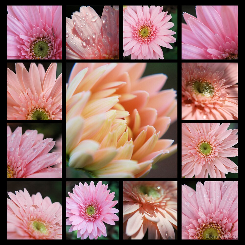 Pink Collage by Donna Wilkins