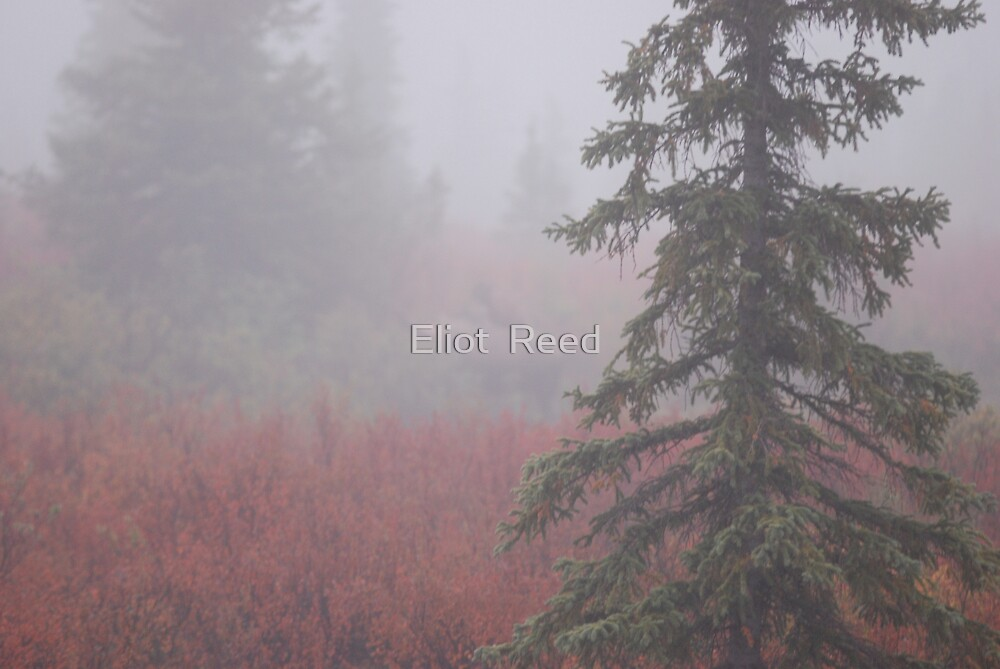 Morning Blur by Eliot  Reed