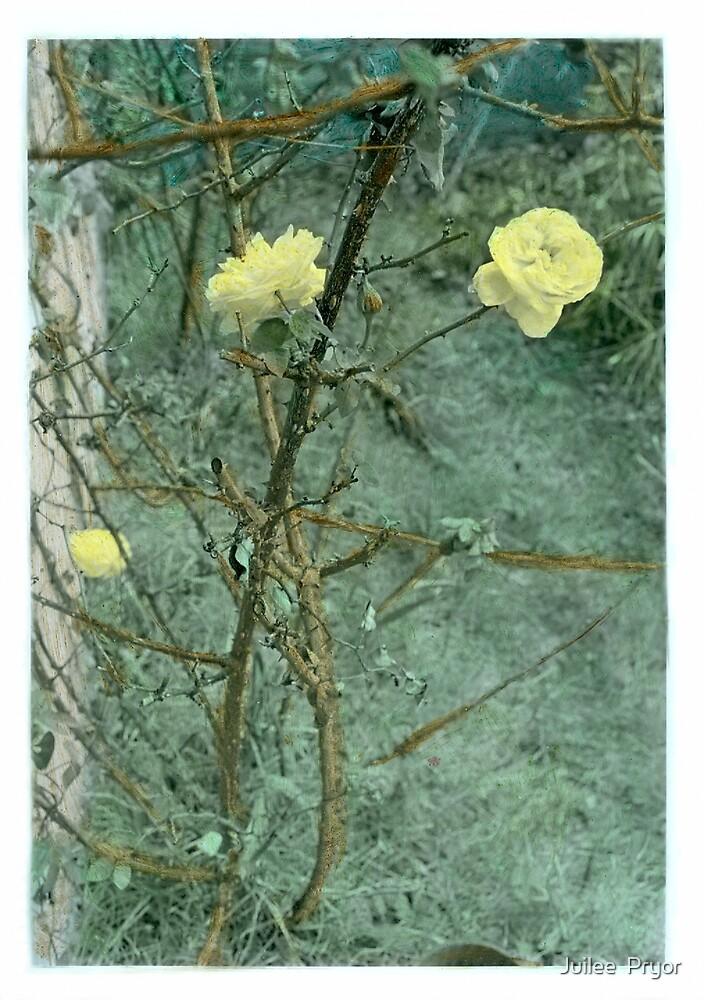 Mellow Yellow...... handcoloured silver gelatin photograph by Juilee  Pryor