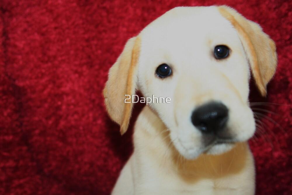 Labrador Retriever by 2Daphne