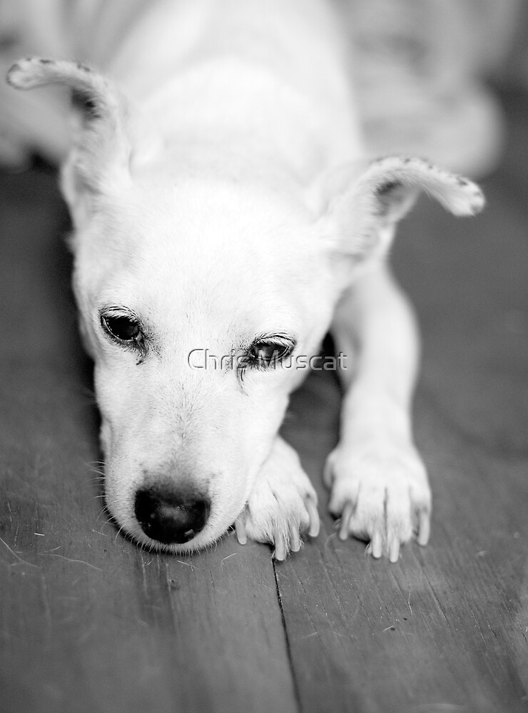 Roxy by Chris Muscat