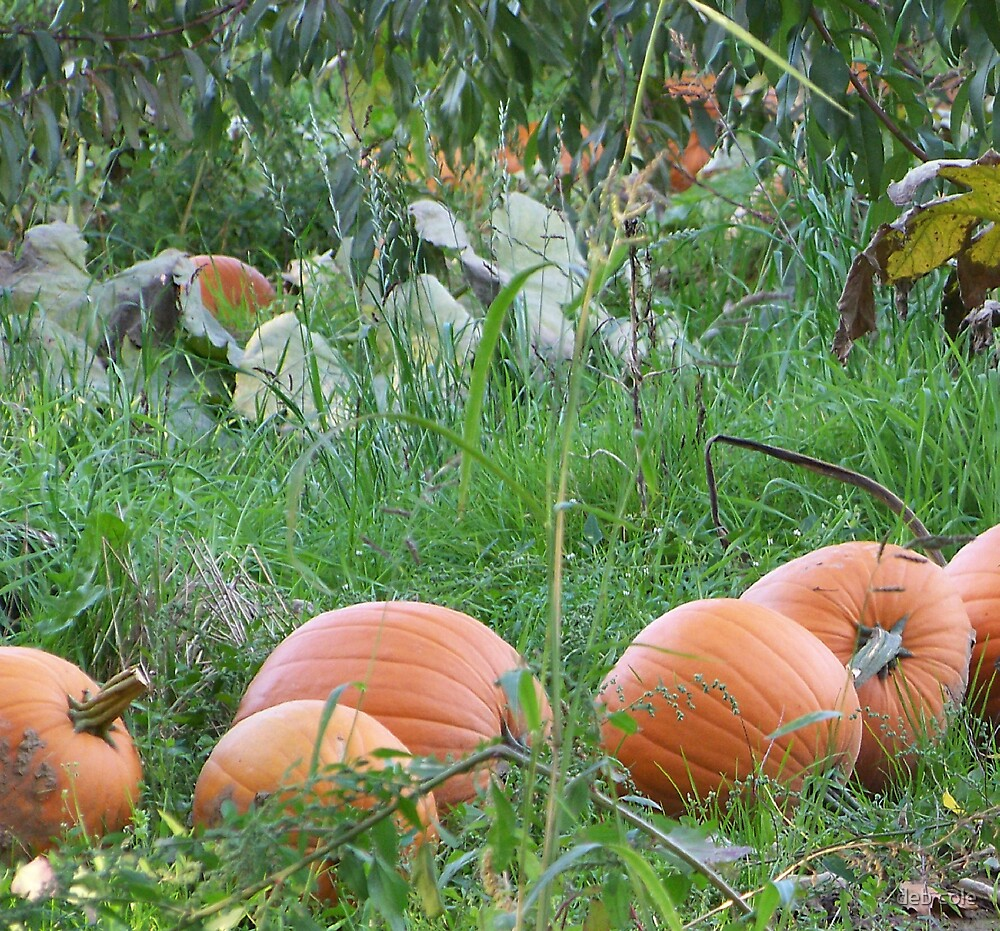Pumpkin Patch by deb cole