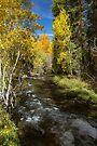 Fall 2017 Bishop Creek by photosbyflood