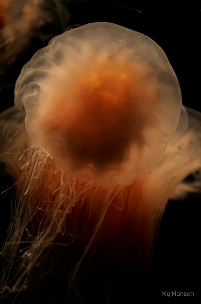 jellyfish by Ky Hanson