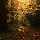 Autumn Gold by Ursula Rodgers
