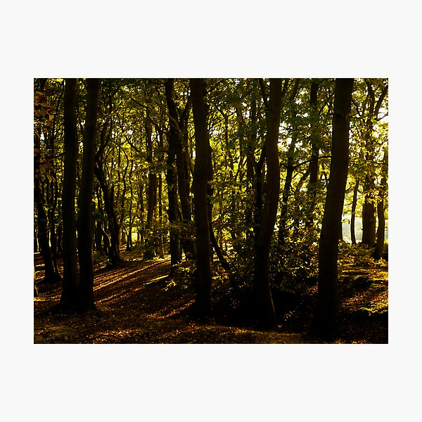 Sunlight through the Trees, Friday Woods Photographic Print