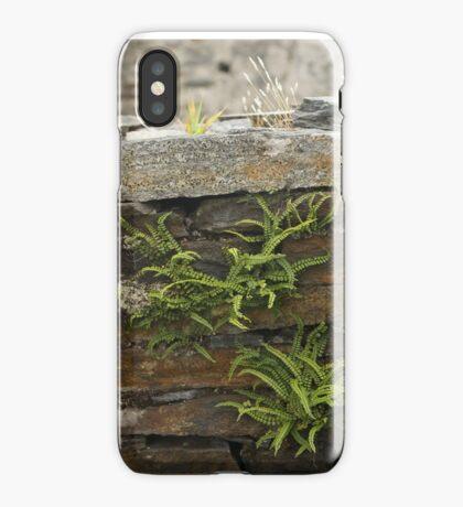Spleenwort Maidenhair fern on wall at Cashelnagor iPhone Case
