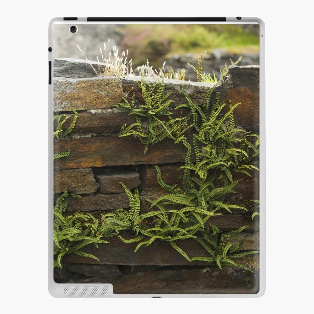 Spleenwort Maidenhair fern on wall at Cashelnagor iPad Case & Skin
