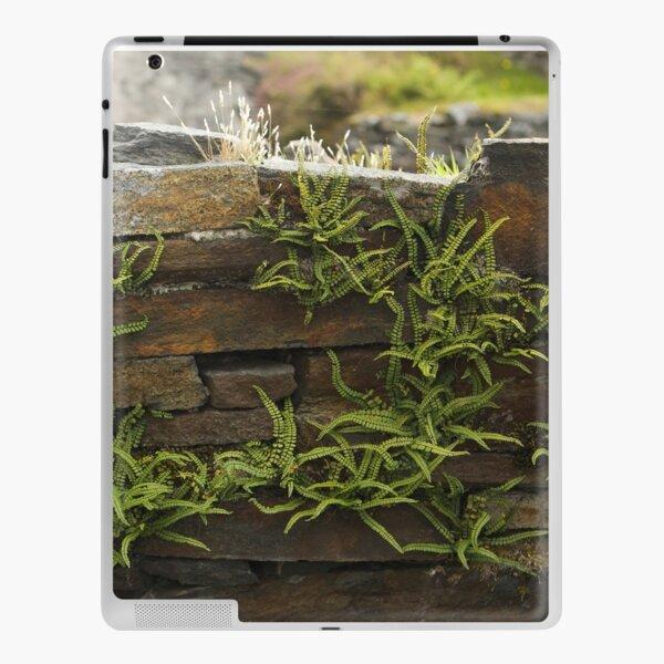 Spleenwort Maidenhair fern on wall at Cashelnagor iPad Skin