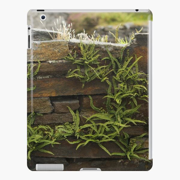 Spleenwort Maidenhair fern on wall at Cashelnagor iPad Snap Case