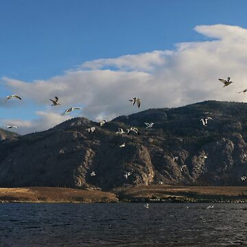 Seagull Morning Osoyoos by jessannjo