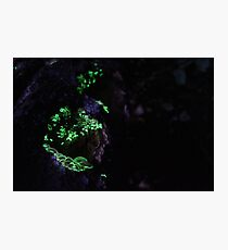 Glowing Mushrooms Photographic Print