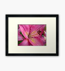 Pink Lily in the garden 3 Framed Print