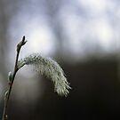 Willow by Yana Art