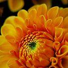 Mornings by Flowers