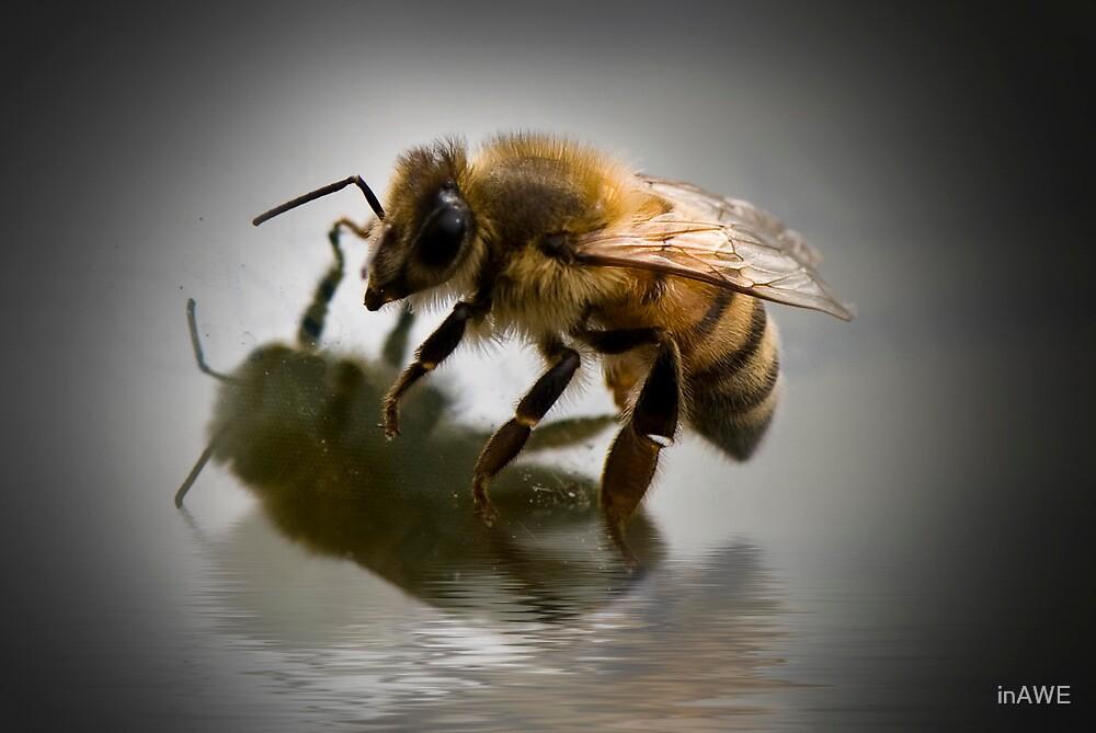 Bee Me by inAWE