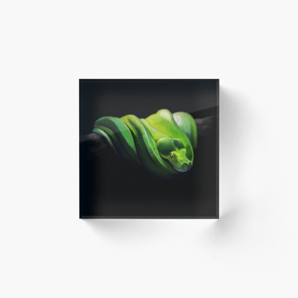 Green tree python Acrylic Block