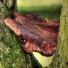 Mushroom - HDR by Anne-Marie Bokslag