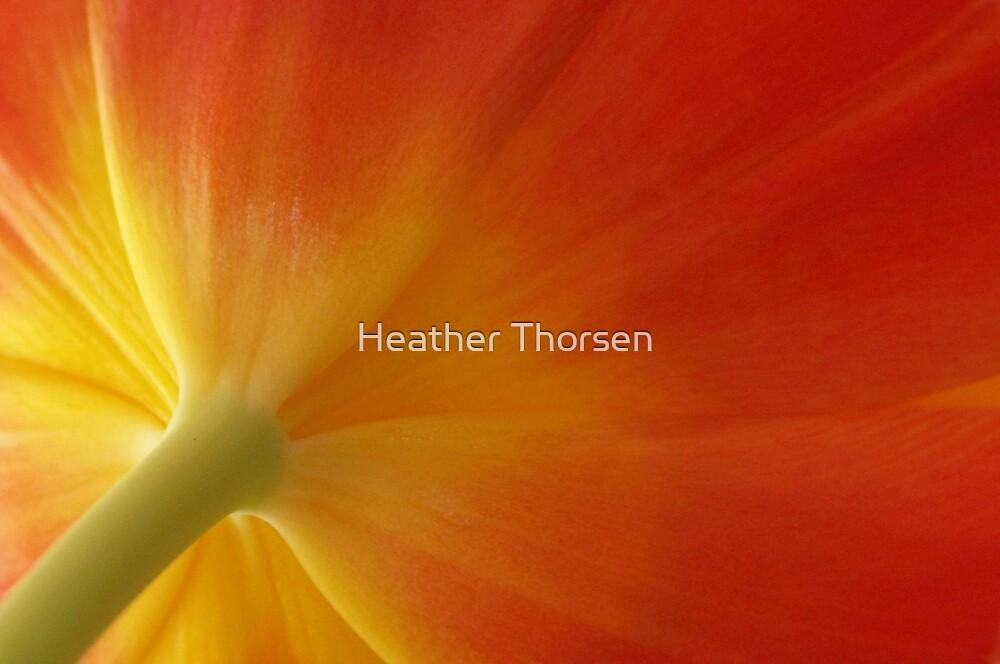 Tulip splendour by Heather Thorsen