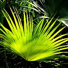New Palm Leaf - The Bloedel Floral Conservatory in Vancouver by AnnDixon