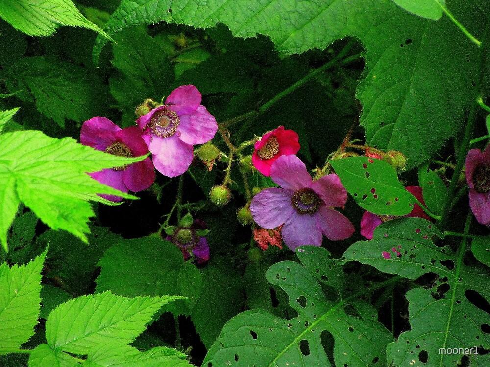Wild Roses by mooner1