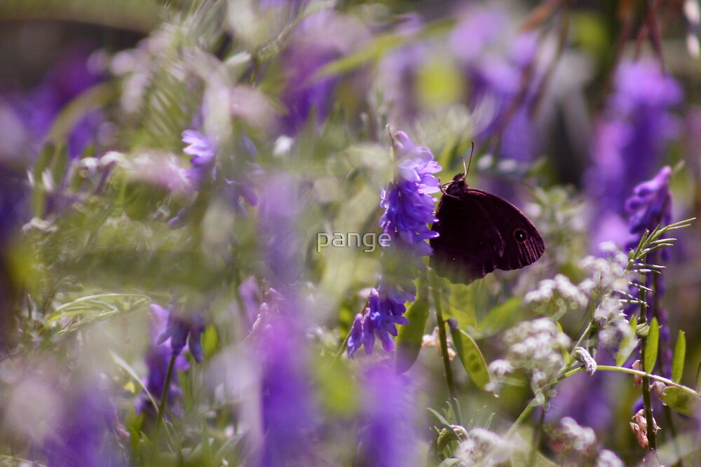 Obscured by Flora by pange