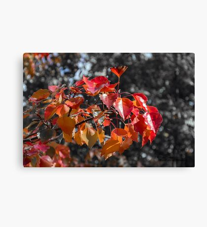 The Best of Autumn Canvas Print