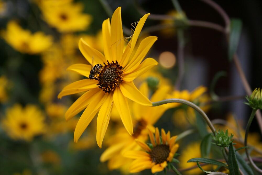 bee & bug on flower by Sheila McCrea