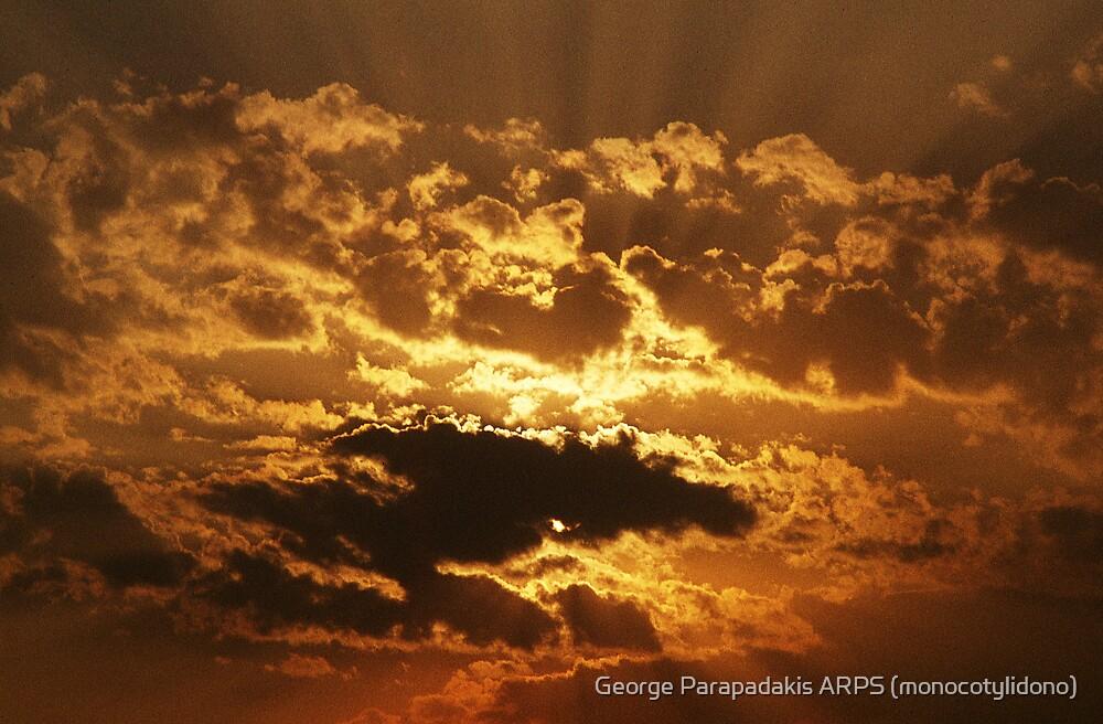 Golden rays of winter by George Parapadakis ARPS (monocotylidono)