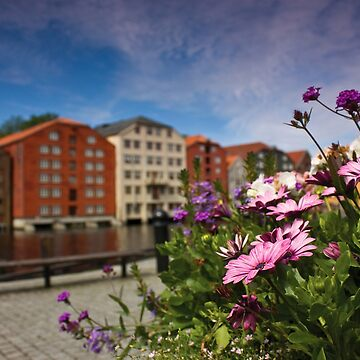 Flowers in Trondheim by domcia