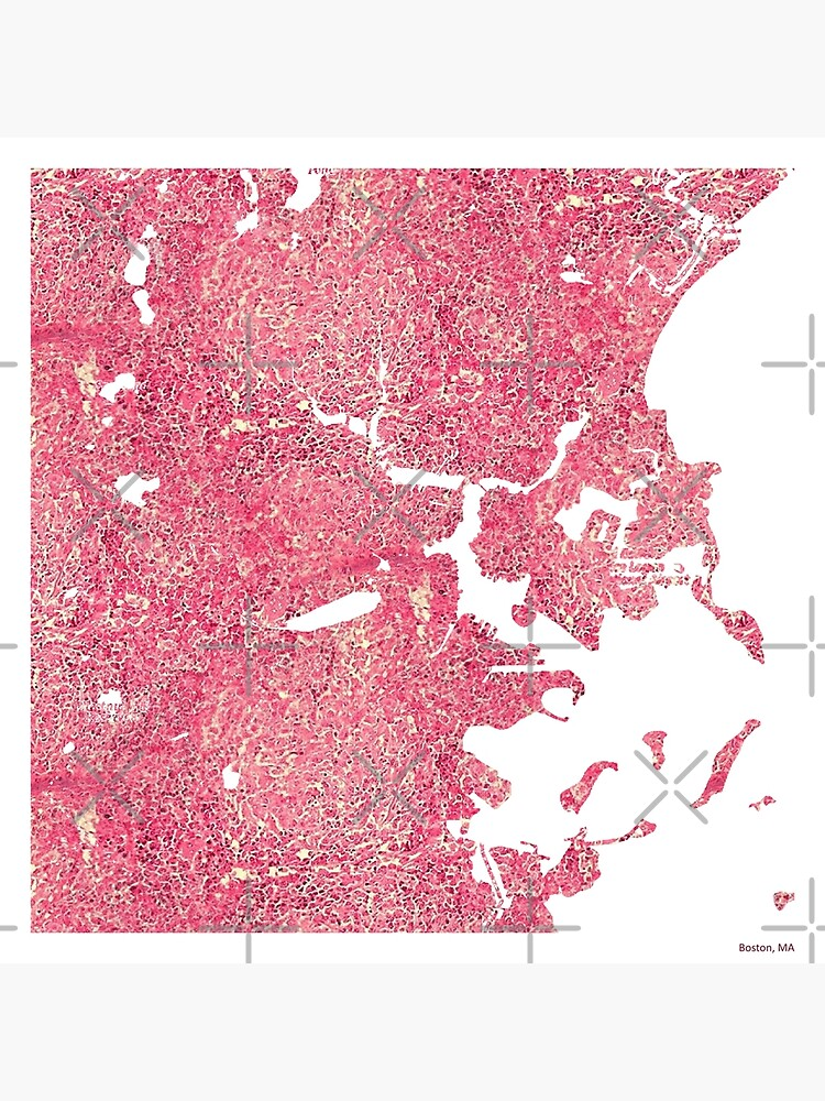 Histology Cities - Boston, MA by stoppersays