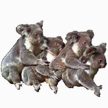 Koala's by czaplewski
