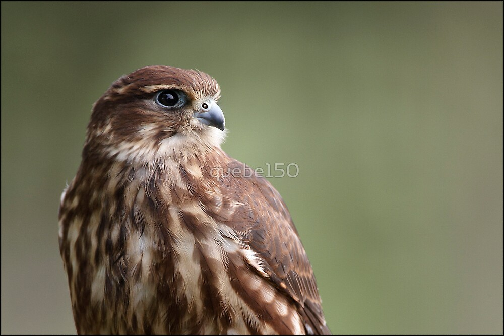 Merlin by quebe150