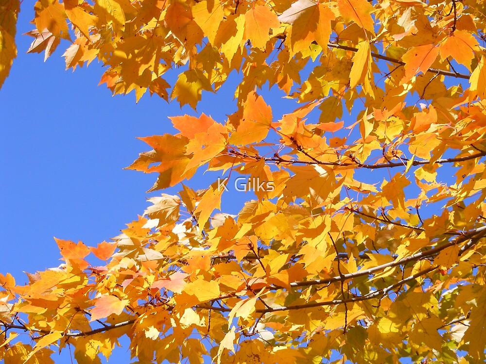 fall foliage by K Gilks