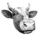 Curious Cow by Gavin  Bake