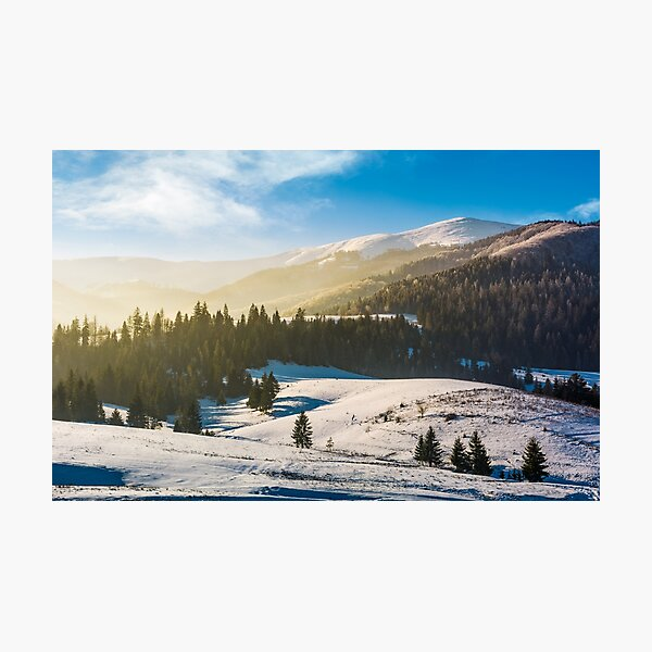 spruce forest on snowy hills Photographic Print