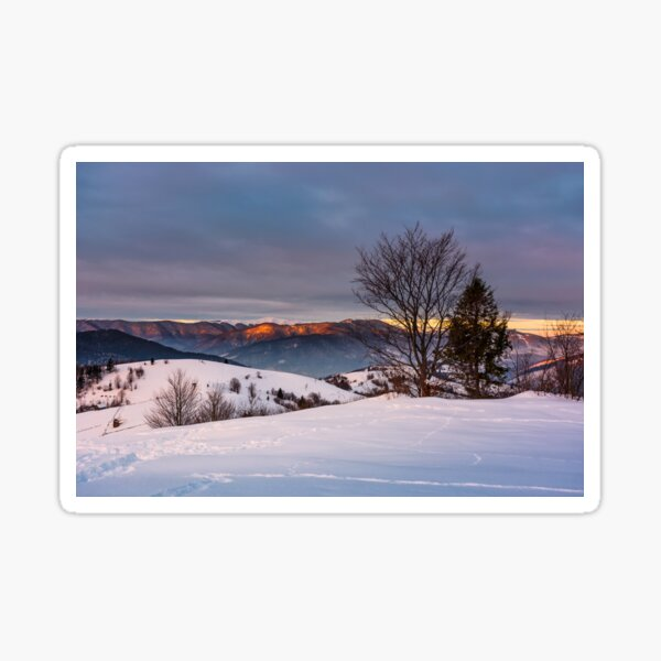 trees on the snow covered hill at sunrise Sticker