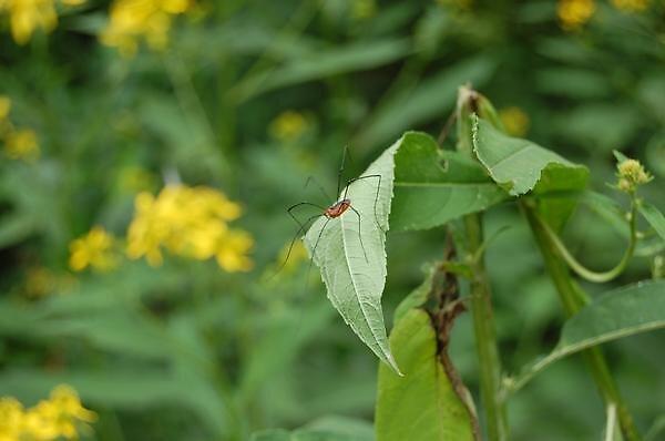 Mr. Spider by Sarah Schultz