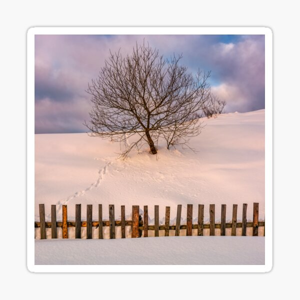 lonely  tree on snowy hillside behind the fence Sticker