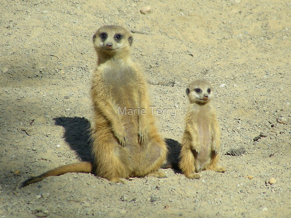 Meerkat Training - Be Alert by Marie Terry
