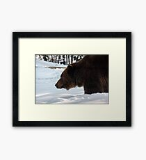 old brown bear hunting in winter forest Framed Print