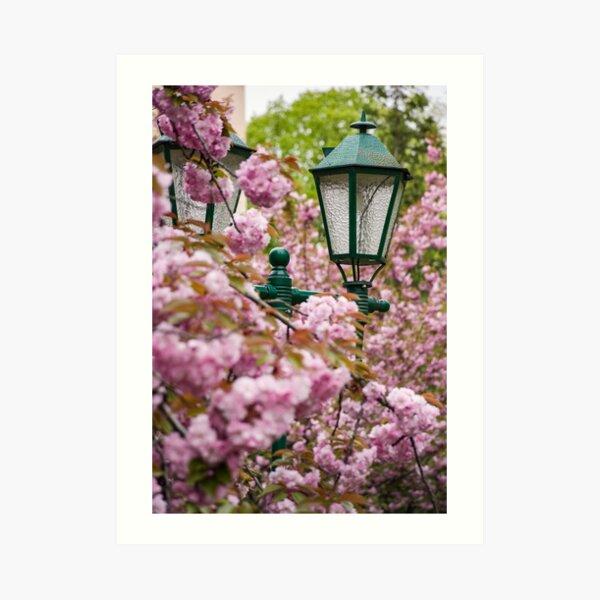green lantern among cherry blossom Art Print