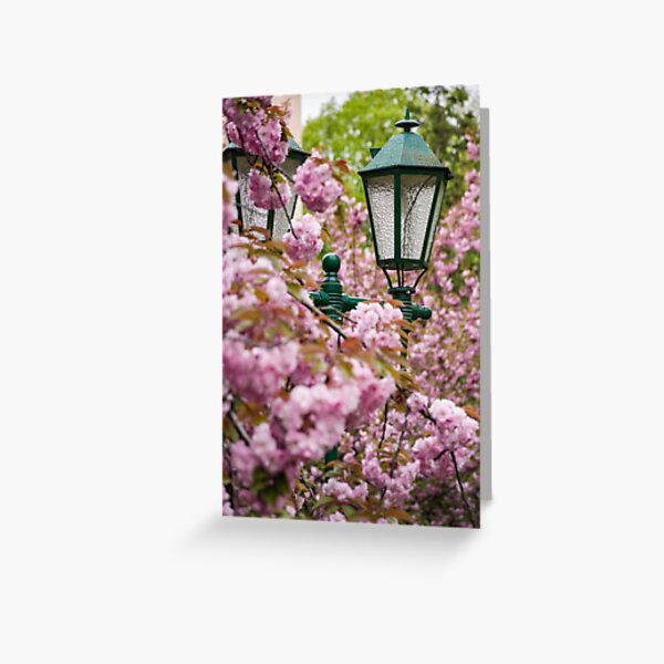green lantern among cherry blossom Greeting Card