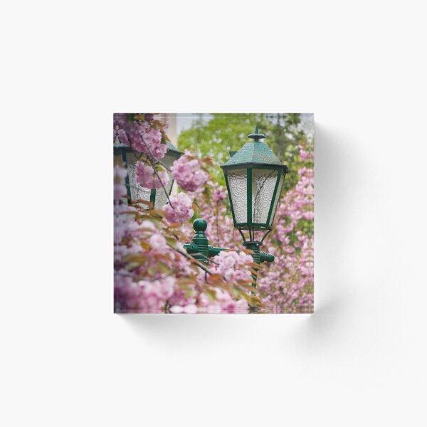 green lantern among cherry blossom Acrylic Block