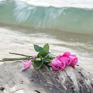 Beach Roses by 14ktgold